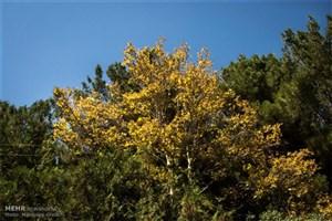 زندگی نزدیک درختان به سلامت مغزوکاهش استرس کمک می کند