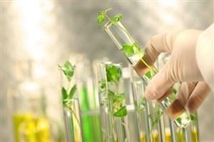تلاش محققان کشور برای تولید ماده موثره دارو در گیاهان