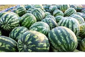 هندوانه های ورامین آلوده است ، نخرید/ / کاشت سبزی در مزارع جنوب پایتخت ممنوع می شود