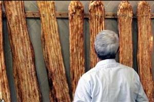 سبوس نان در دستور کار وزارت بهداشت و سازمان ملی استاندارد قرار گرفت