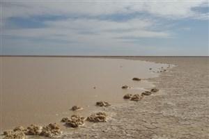 بی توجهی دولت به کمک دانشگاه آزاد برای حل معضل خشکسالی تالاب هامون