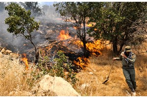 خاکستر بلوط/فقر معیشتی مردم عامل تخریب جنگلهای زاگرس/هرسال ٨هزار هکتار جنگل آتش میگیرد