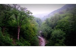 واگذاری 5 هزار هکتار از جنگل های بکر هیرکانی  به اوقاف مازندران