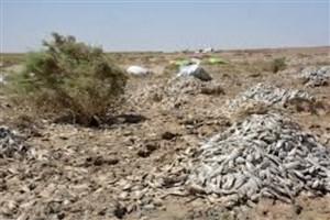 تالاب هامون خشک شد/مرگ دو میلیون ماهی در هامون