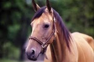 آیا اسبها میتوانند با انسان هاحرف بزنند؟