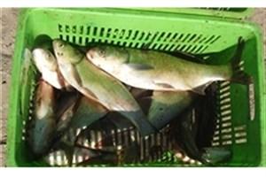 راهاندازی 8 هزار واحد پرورش ماهی با پرداخت 120 میلیارد تومان تسهیلات توسط بسیج سازندگی