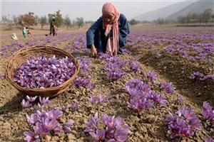به دست گرفتن بازار جهانی زعفران از طریق بورس کالا