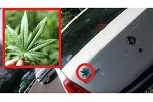 نصب عکس «ماری جوانا» خلاف مقررات است/ 30هزار تومان جریمه برای نصب علائم فاقد مجوز!