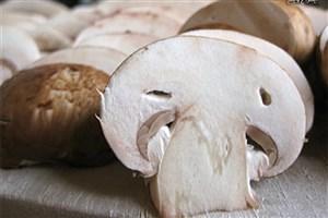 مسمومیت ۵۹ نفر با قارچ از ابتدای سال/2 نفر جان خود را از دست دادند