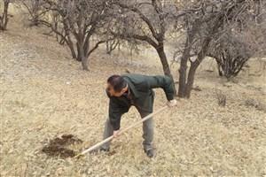 کاشت بیش از 70 هزار بذر بلوط درطرح ملی جنگلانه امسال کهگیلویه وبویراحمد