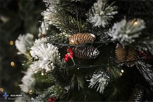 شهروندان مسیحی از کاج مصنوعی در شب کریسمس استفاده کنند