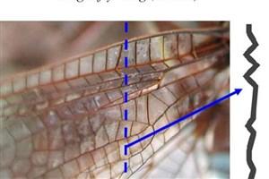 ساختار بال سنجاقک نمادی از اعجاز طراحی
