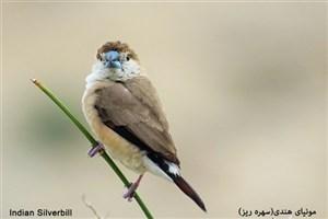 پرندگان در سر و صدای ترافیک پیر می شوند!