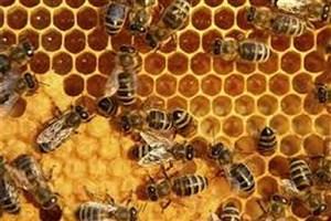 زنبورها از الگوهای تجاری پیروی میکنند