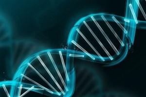 """سمینار """"بررسی ژنتیکی عقبماندگی ذهنی""""برگزار میشود"""