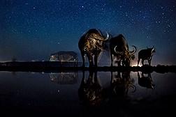 بهترین عکس های گیاهان و جانوران از سراسر دنیا