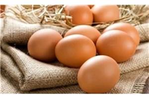 افزایش تقاضای نوروزی قنادی ها، قیمت تخم مرغ را افزایش داد