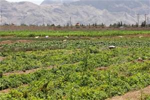 راه اندازی رشته تولید و بهره برداری از گیاهان داروئی و معطر در دانشگاه آزاد شهرضا