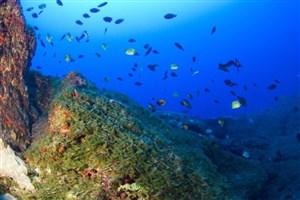 احداث یکی از بزرگترین پارکهای دریایی  در اقیانوس آرام