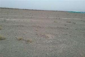 توسعه بی رویه کشاورزی مهمترین عامل کمبود آب در استان کرمان
