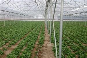 تجهیز و هوشمندسازی گلخانه خورشیدی در واحد ورامین پیشوا
