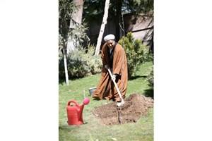 دل نوشته مدیر روابط عمومی مجمع تشخیص مصلحت نظام در روز درختکاری به یاد «آیت الله»