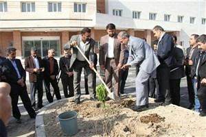 600 اصله نهال در بیمارستان 96 تختخوابی امام علی (ع) واحد کازرون غرس شد