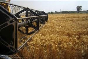 طرح قیمت تضمینی گندم در بورس کالا ، تدبیر دولت برای حمایت از کشاورزان