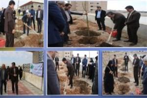 کاشت بیش از 100 اصله نهال با حضور خانواده معزز شهدا در دانشگاه آزاد اسلامی واحد هشتگرد