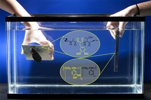 Researchers Create New 'Biomimetic' Glue