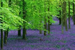 حفاظت از گونههای گیاهی مقدم بر احیای آنهاست