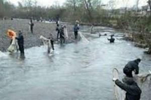 نسل کشی ماهیان مولد استخوانی در رودخانه های مازندران