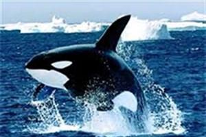 """نگرانی مقامات فرانسوی از گسترش چالش """"نهنگ آبی"""""""