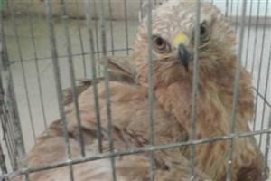 تحویل پرنده شکاری و لاک پشت به محیط زیست در شهرستان پاکدشت