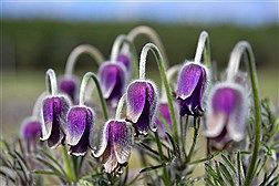فصل بهار در سراسر اروپا