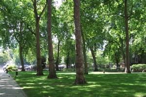 فضای سبز شهرمان را دریابیم