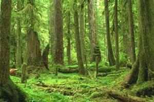 سازمان حفاظت محیط زیست از پرداخت هزینه دادرسی معاف شد