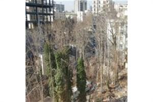 باغکُشی در فرشته/بهجای مصادره، 171 اصله درخت قطع شد