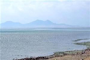 بازگشت فلامینگوها به دریاچه ارومیه/ کاهش تراز در تابستان طبیعی است
