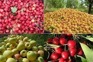 معاون حجتی اعلام کرد؛ ارزآوری ۵.۷ میلیارد دلاری صادرات محصولات کشاورزی در سال ۹۵