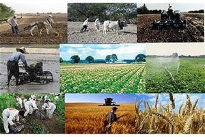 توقف روند رو به رشد تراز تجاری محصولات کشاورزی