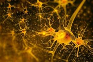 کسب مقام دانشجوی واحد علوم دارویی در کارگاه بین المللی پیشرفته علوم اعصاب