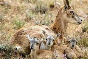 مراقب حیات وحش در فصل بهار باشیم