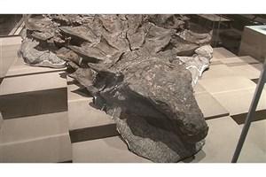 رونمایی از کاملترین فسیل یک دایناسور در کانادا