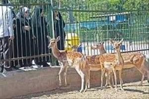 آخرین مهلت به 4 مرکز فاقد مجوز نگهداری حیات وحش پایتخت