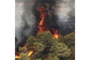 ردپای قاچاقچیان گراس در آتشسوزیهای میانکاله