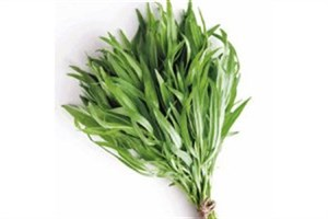 گیاه دارویی قدرتمندی که مسکنی برای دردهای شماست