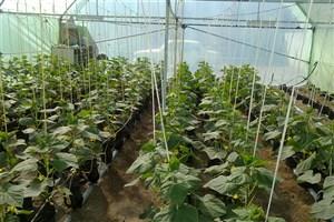 میزان آلاینده در میوه ها  با مدیریت صحیح کشاورزی می تواند پایینتر باشد