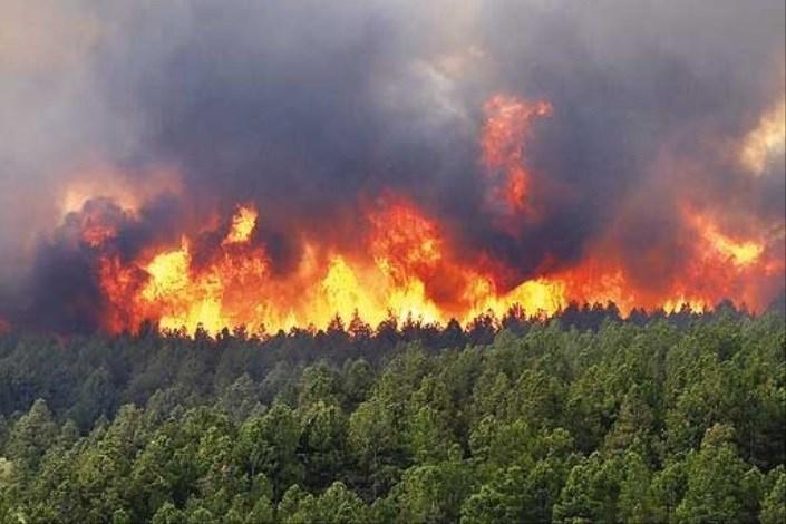 مدیر کل منابع طبیعی گلستان : از بین رفتن 40 هکتار از جنگل های مینودشت در آتش