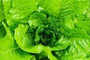 ارتباط عدم مصرف سبزیجات با خطر بزرگ شدن غیرعادی قلب کودکان